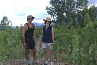 Grape harvest at Stella Vineyard kefalonia-01
