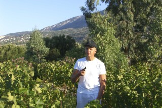 Grape harvest at Stella Vineyard kefalonia-04