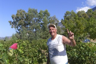 Grape harvest at Stella Vineyard kefalonia-07