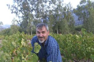 Grape harvest at Stella Vineyard kefalonia-11