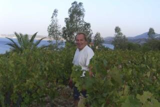 Grape harvest at Stella Vineyard kefalonia-12