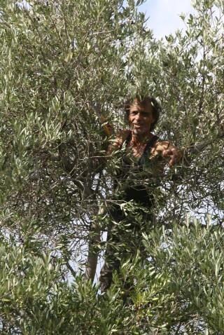 olives's picking season Stella Vineyard studios kefalonia-11