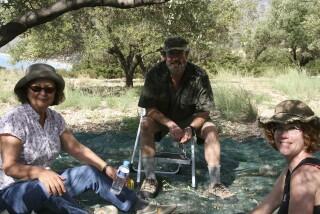 olives's picking season Stella Vineyard studios kefalonia-15