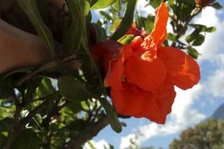 spring and easter Stella Vineyard kefalonia-04