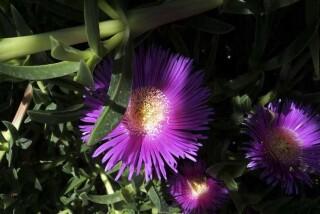 spring and easter Stella Vineyard kefalonia-05