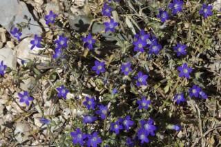 spring and easter Stella Vineyard kefalonia-06