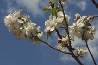 spring and easter Stella Vineyard kefalonia-08