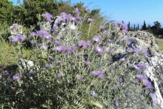 spring and easter Stella Vineyard kefalonia-11