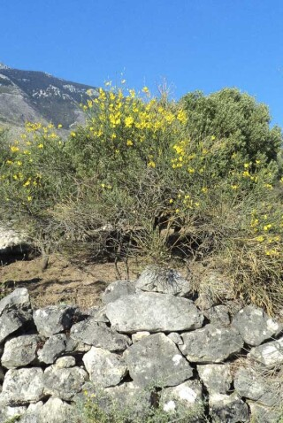 spring and easter Stella Vineyard kefalonia-13