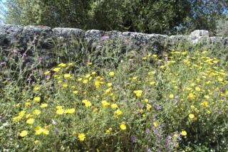 spring and easter Stella Vineyard kefalonia-15