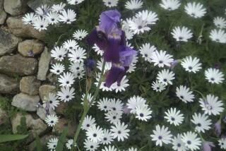 spring and easter Stella Vineyard kefalonia-17