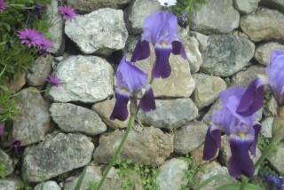 spring and easter Stella Vineyard kefalonia-18