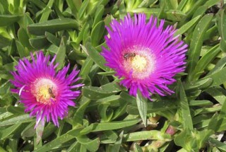 spring and easter Stella Vineyard kefalonia-21