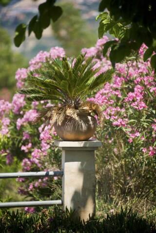 spring and easter Stella Vineyard kefalonia-22