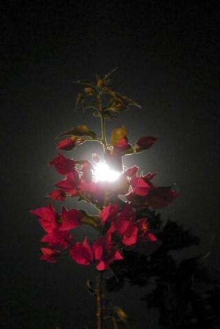 sunset and moon Stella Vineyard studios kefalonia-25