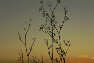 sunset and moon Stella Vineyard studios kefalonia-27