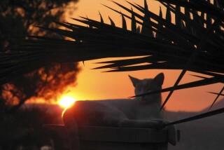 sunset and moon Stella Vineyard studios kefalonia-28