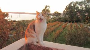 stella-vineyard-happy-customer